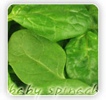 Our Products - Baby Spinach